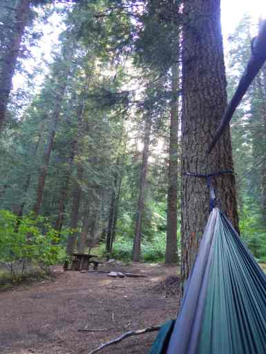 In the pines at Swinging Bridge in the Boise National Forest.