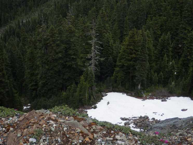 Wild flowers AND snow heading over Chinook Pass.