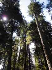 Look up. Look waaaay up. Under the trees in Cathedral Grove