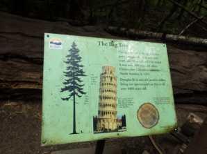 Taller than Pisa!