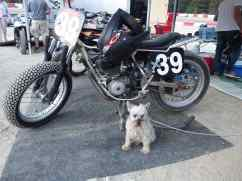 The guard dog for bike 39