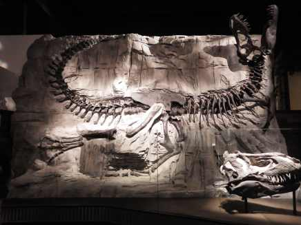 The Black Beauty T-Rex
